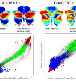 functional gradients calculated based on functional connectivity between the cerebellum and the cerebral cortex revealed a similar distribution when  [ 1500 x 1154 Pixel ]