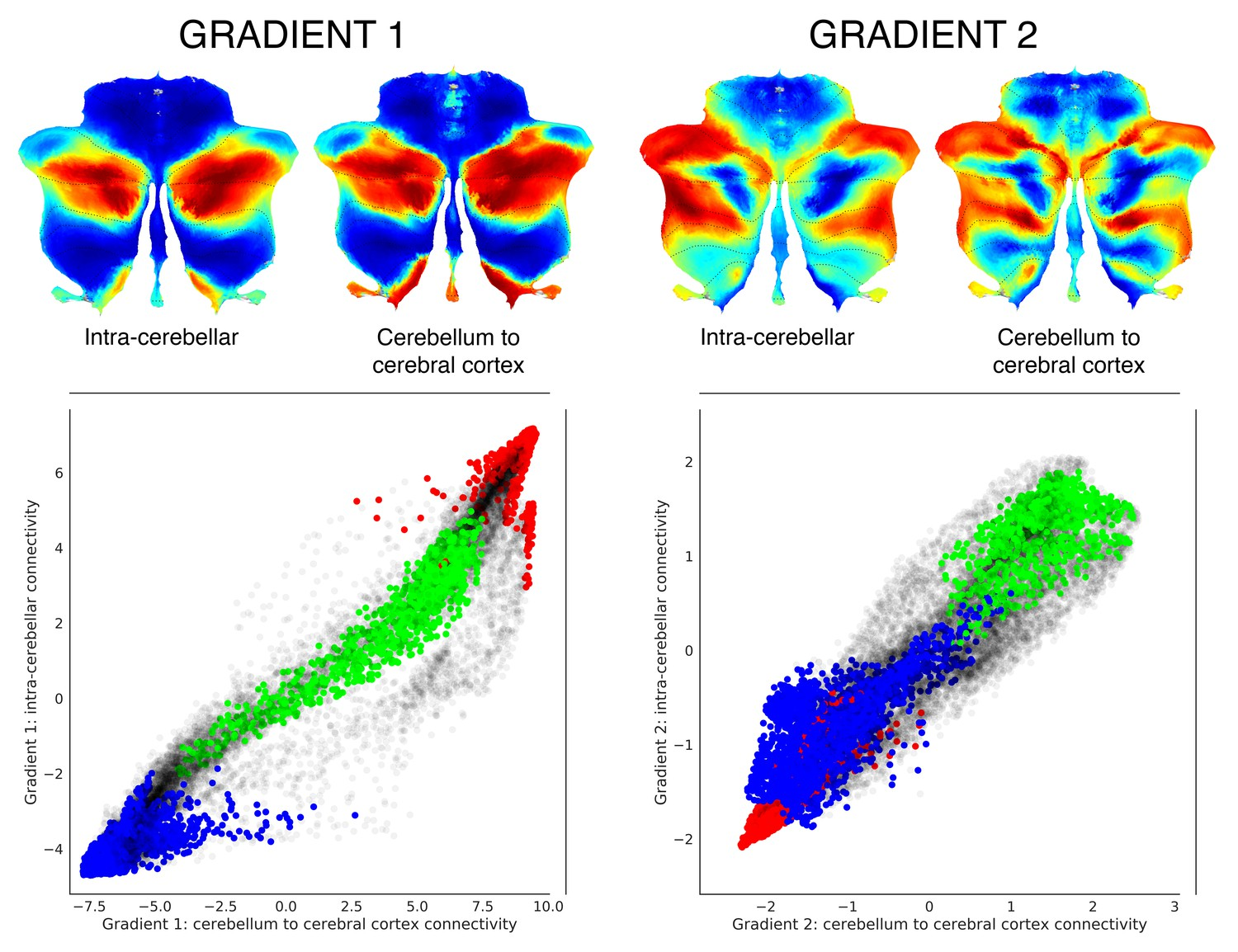 hight resolution of functional gradients calculated based on functional connectivity between the cerebellum and the cerebral cortex revealed a similar distribution when