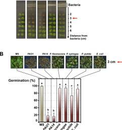 pseudomonas aeruginosa releases a germination repressive activity gra  [ 1110 x 1500 Pixel ]
