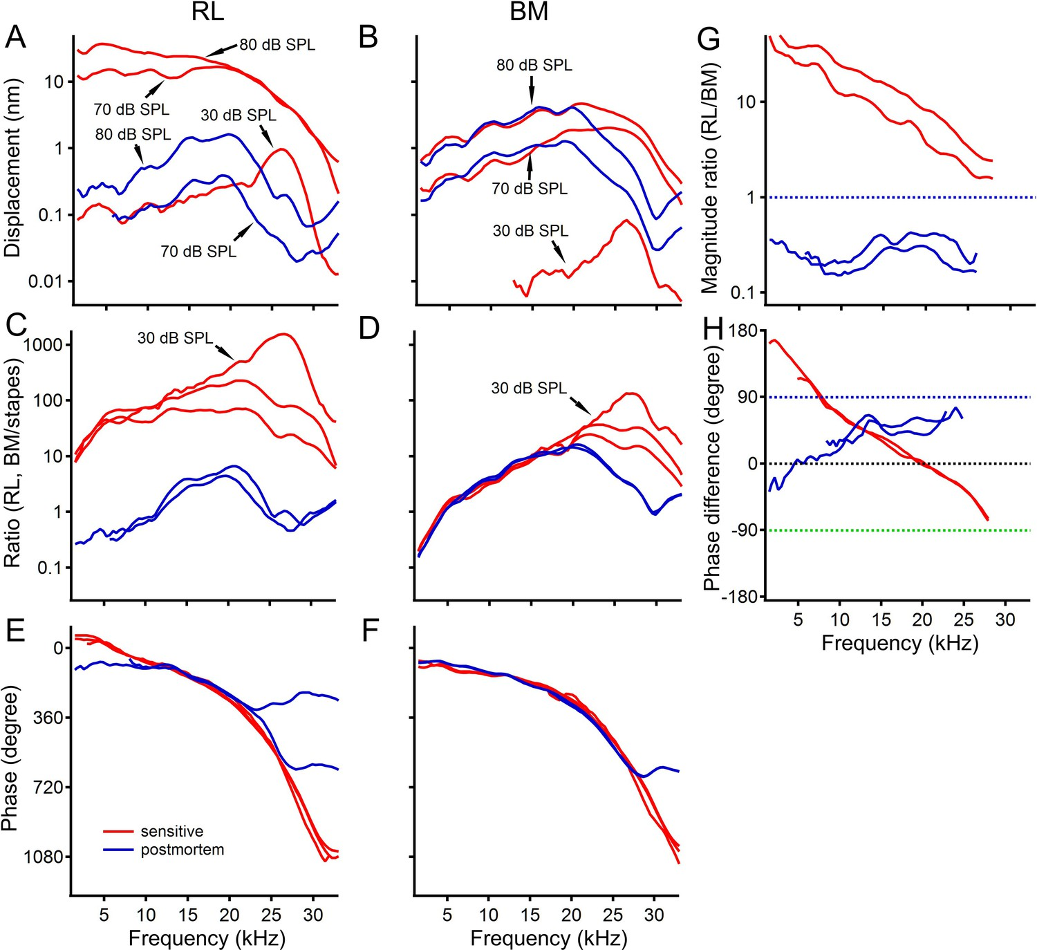 hight resolution of postmortem changes in reticular lamina and basilar membrane vibrations