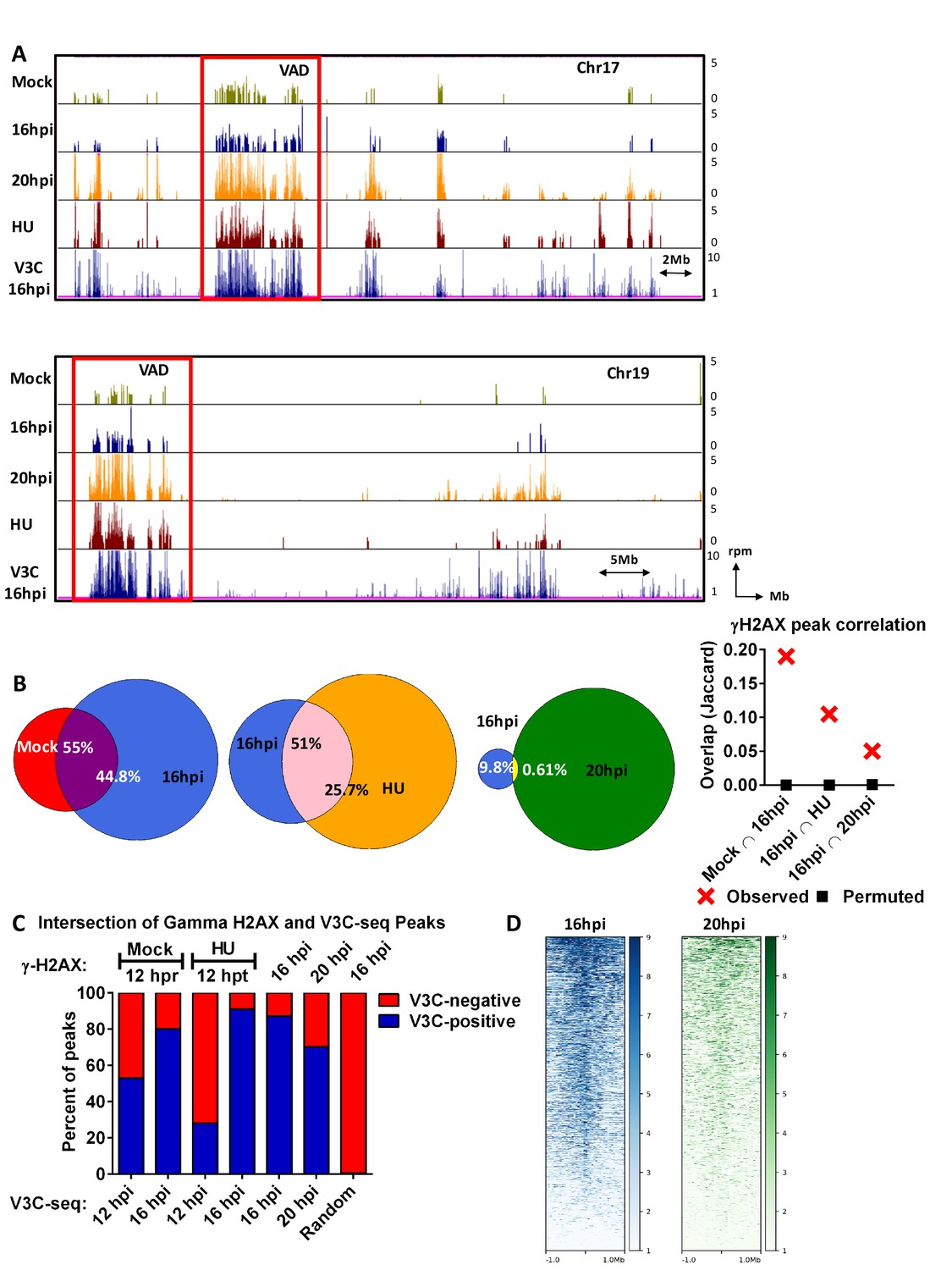 hight resolution of the mvm genome initiated infection at sites of cellular dna damage that in mock infected cells also exhibited dna damage as the cells cycled through s phase