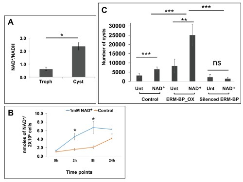 small resolution of intracellular nad nadh is elevated during encystation and nad facilitates encystation