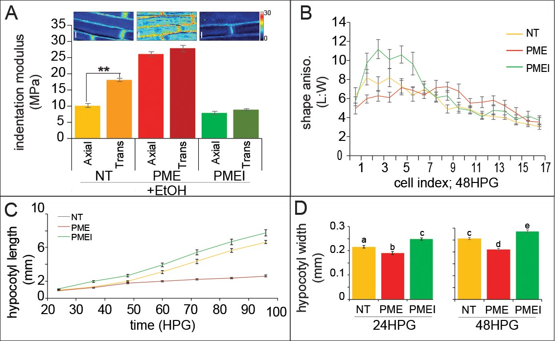 hight resolution of ectopic alteration of pectin biochemistry alters cell anisotropy and hypocotyl elongation