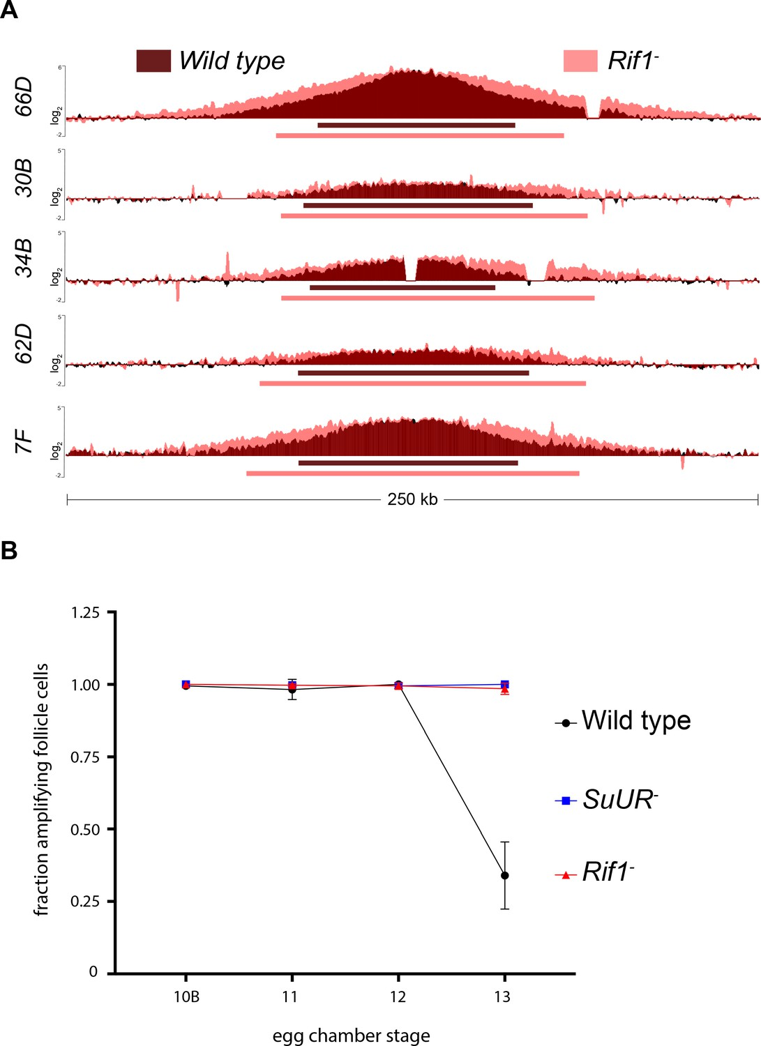 Rif1 Inhibits Replication Fork Progression And Controls Dna Copy Number In Drosophila