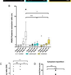 cytoskeleton involvement in par3 polarity  [ 919 x 1500 Pixel ]