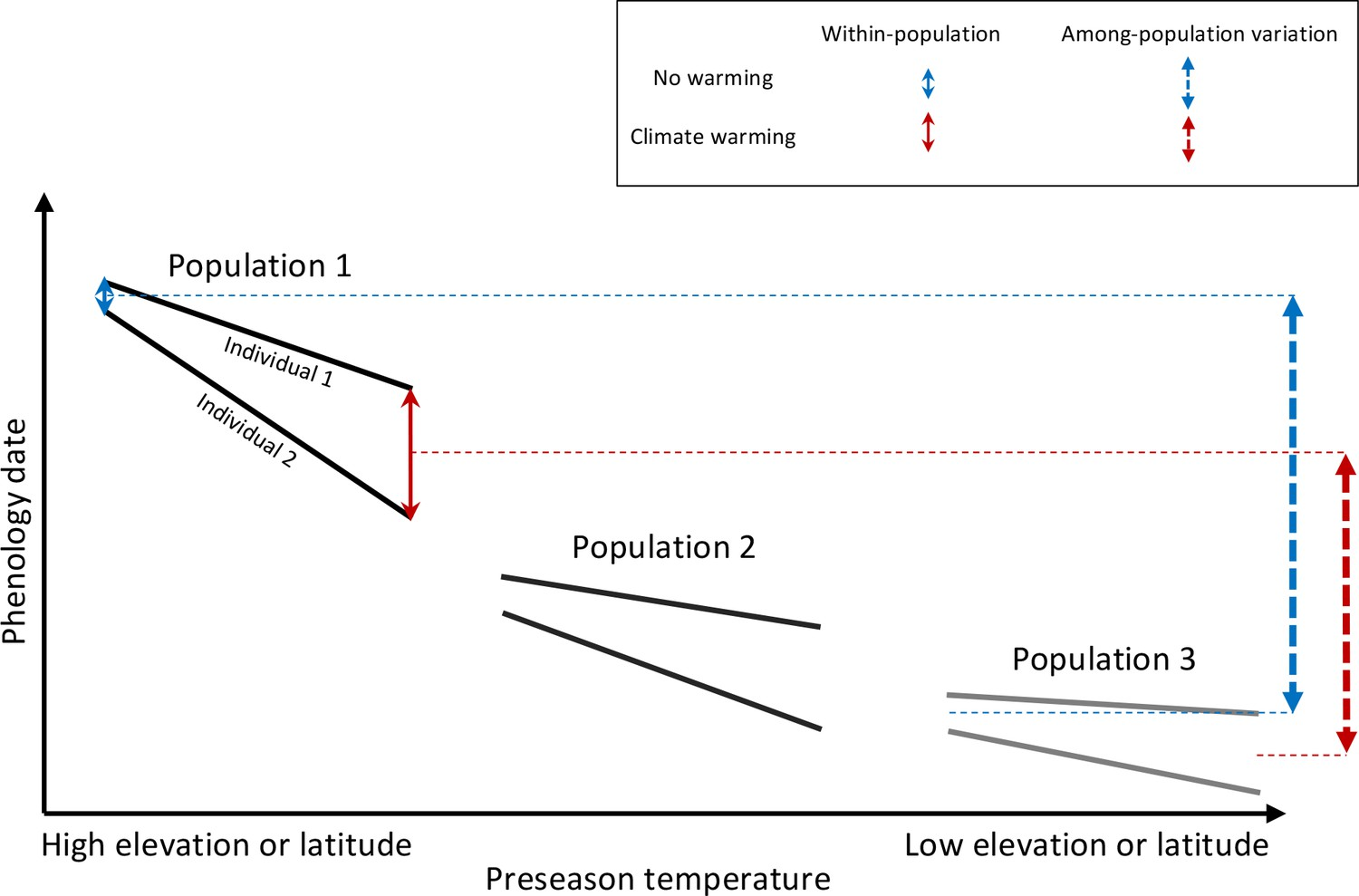 hight resolution of schematic representation of within and among population phenological synchrony in response to climate warming