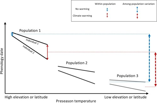 small resolution of schematic representation of within and among population phenological synchrony in response to climate warming