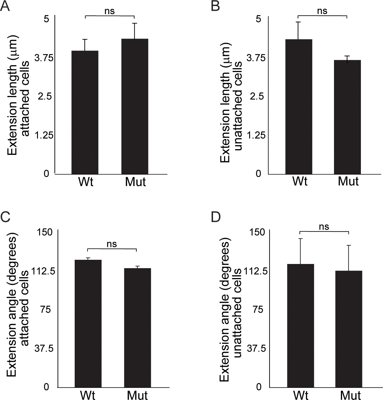hight resolution of quantitation of cellular extensions reveals no significant differences between wild type and wnt11 mutant nephron progenitors