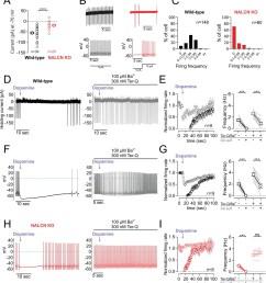 d2 receptor inhibition of nalcn slows spontaneous firing  [ 1372 x 1500 Pixel ]