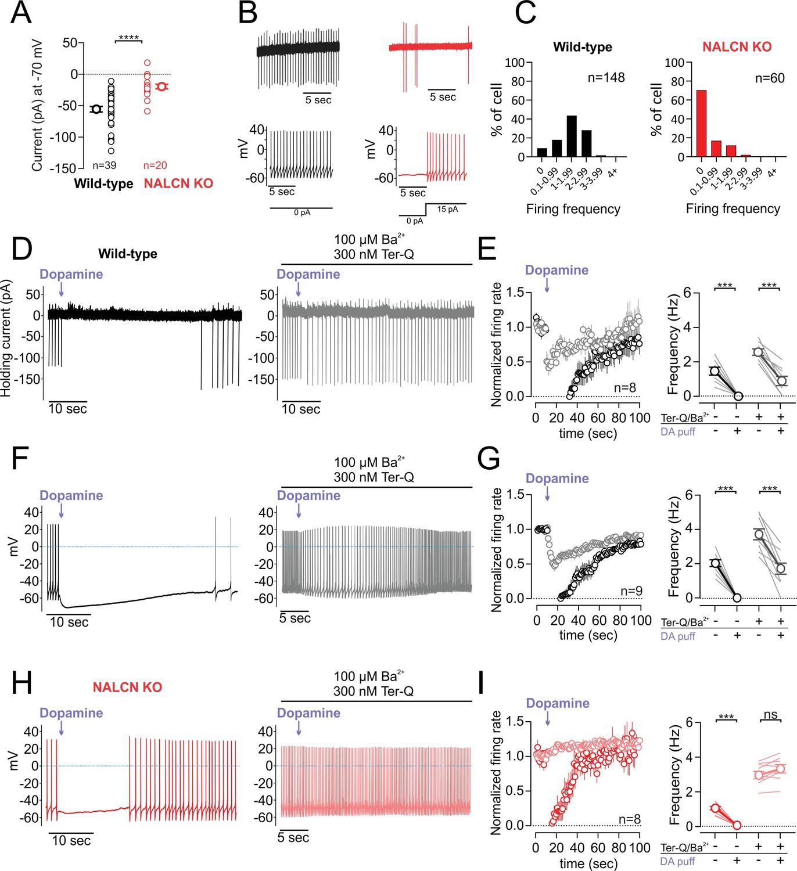 hight resolution of d2 receptor inhibition of nalcn slows spontaneous firing
