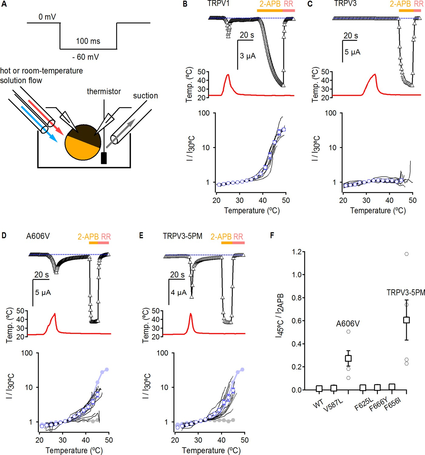 Figures and data in Conserved allosteric pathways for