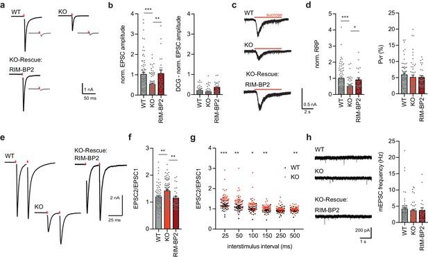 RIM-BP2 primes synaptic vesicles via recruitment of Munc13