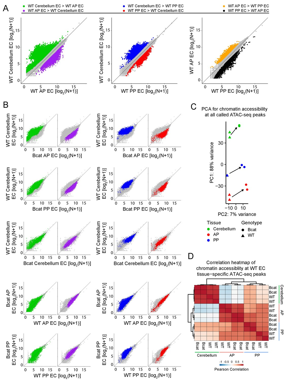 hight resolution of genome wide visualization of accessible chromatin differences by ec tissue type in wt vs beta catenin stabilized samples