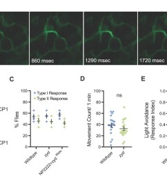 mutations in a cortex glial nckx generate stress induced seizures without affecting brain structure or baseline neuronal function  [ 1500 x 820 Pixel ]