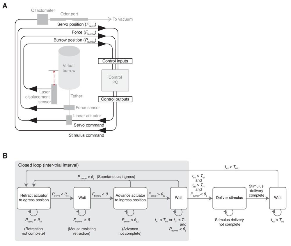medium resolution of schematic and flow diagram