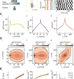 measurements of body and limb kinematics in freely walking drosophila  [ 1040 x 1500 Pixel ]
