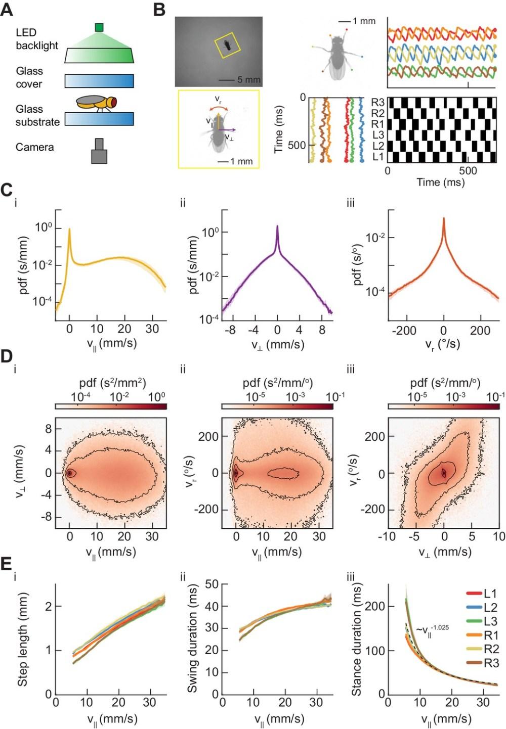 medium resolution of measurements of body and limb kinematics in freely walking drosophila