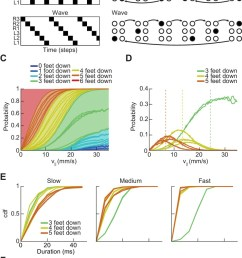 drosophila use a two cycle limb coordination pattern across all walking speeds  [ 871 x 1500 Pixel ]