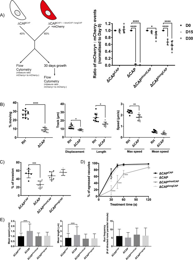 Differential requirements for cyclase-associated protein