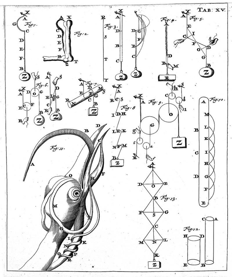DE MOTU ANIMALIUM BORELLI PDF