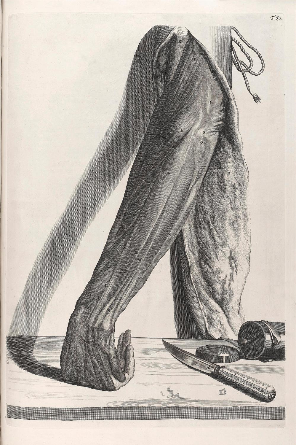 medium resolution of diagram showing the muscles of the arm with the skin peeled back a sergical knife and instrument box lies to the side