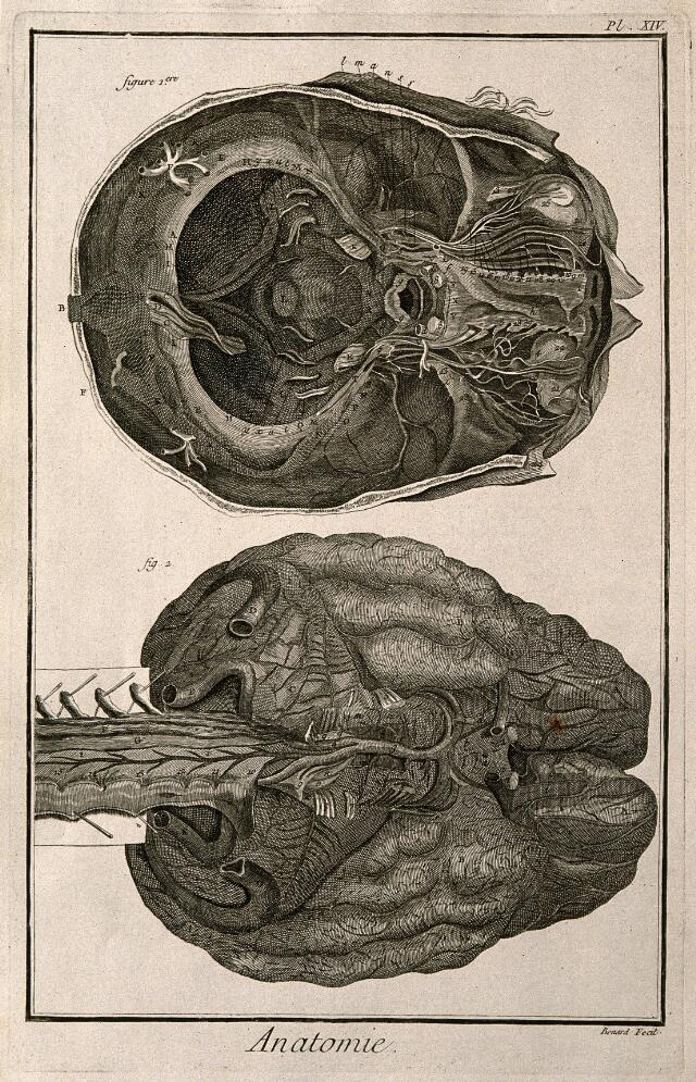 the human brain in photographs and diagrams skeletal muscle labeled diagram print head-gear | catalogue search wellcome collection