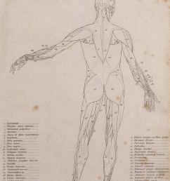 an corch with left arm extended to the side seen from the back diagram showing the outlines of the muscles line engraving by campbell 1816 1821  [ 1257 x 1627 Pixel ]