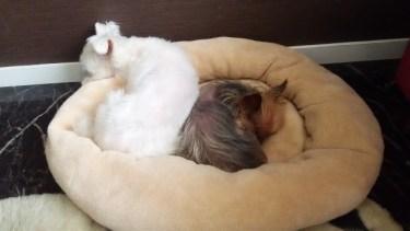 ペットは家族!ペット用ベッドのおすすめと選び方とは?