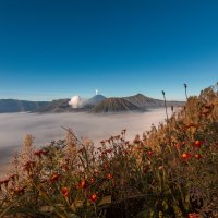Mount Bromo and The Beauty Inside