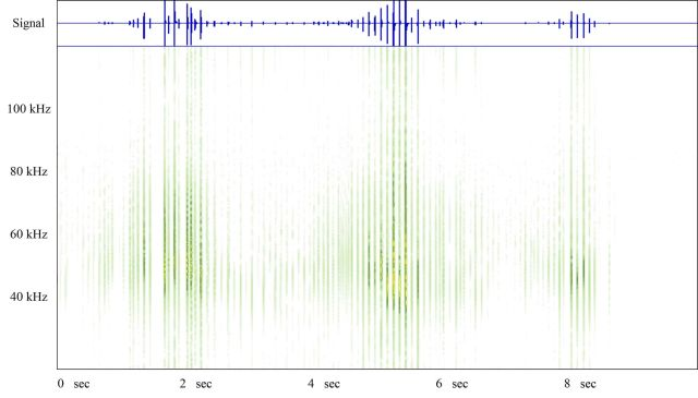A spectrograph of a bank recording of a Brown Long Eared Bat.