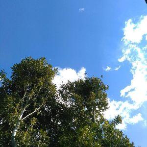 今日は寒さが戻った感が在りますが空気が澄んで青空が綺麗です#蔵 #筏 #ikada #japan #Tokyo #mitake #御岳 #御岳山 #mitakesan #多摩川 #御岳渓谷 #御嶽駅 #奥多摩 #筏流し #ブドウ山椒 #おにぎり #tasty #バイク #ツーリング #ロードバイク #アルパインクライミング #デッドエンド #ジムニー #JA22 #武蔵御嶽神社 #ペット可 #青空