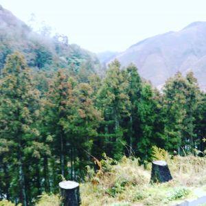 おはようございます雨の日は山の緑が潤って心地良さそう#蔵 #筏 #ikada #japan #Tokyo #mitake #御岳 #御岳山 #mitakesan #御岳山ロックガーデン #武蔵御嶽神社 #多摩川#御岳渓谷 #奥多摩 #ブドウ山椒 #おにぎり #tasty #バイク #ロードバイク #デッドエンド #ジムニー #JA22 #ペット可