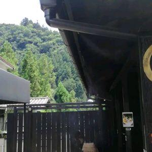 扇風機のみの炭鳥ikadaですが、入口の軒にミストクールを取り付けました。これで、テント席のお客様に少しでも涼しさを感じて頂けたら。と思います🤗http://ikadamitake.com 営業時間11~17時(夏季)木曜定休(祭日は営業)※むかし鳥、ばくだんは数に限りがございます。1個からお取り置き致します♪Tel.0428-85-8726#炭鳥 #蔵 #筏 #ikada #むかし鳥 #mitake #tokyo #御岳 #御岳山 #御岳山ロックガーデン #武蔵御嶽神社 #多摩川 #御岳渓谷 #ランチ #奥多摩フィッシングセンター #奥多摩 #日原鍾乳洞 #味玉 #バイク #ロードバイク #カヌー #カヤック #リバーSUP #ラフティング #デッドエンド #ペット可