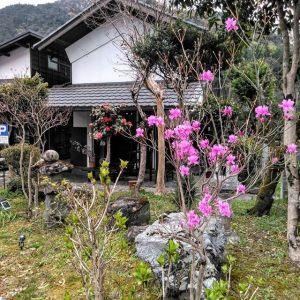 #ミツバツツジ の花と #ベニガクアジサイ の芽吹き 今日の御岳は19℃になる様で、草木も一気に開花や芽吹きが進みそうです🤗http://ikadamitake.com営業時間・4月〜12月 11〜17時1月〜3月 11〜16時金曜定休(祭日は営業)※むかし鳥、ばくだんは数に限りがございます。1個からお取り置き致します♪Tel.0428-85-8726#むかし鳥 #体験型 #炭鳥ikada #ばくだん #mitake #御岳 #御嶽駅 #御岳山 #御岳山ロックガーデン #武蔵御嶽神社 #御岳神社 #御岳渓谷 #東京アドベンチャーライン #御岳ランチ #奥多摩フィッシングセンター #奥多摩 #日原鍾乳洞 #イマタマ #バイク #ロードバイク #サイクリング #カヌー #カヤック #ラフティング #riversup #デッドエンド #ペット可