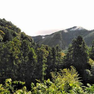 昨夜は雨が降っていましたが、今日は時おり日が射しています炭鳥ikadaは通常通り営業しております🥚http://ikadamitake.com営業時間・4月〜12月 11〜17時1月〜3月 11〜16時金曜定休(祭日は営業)Tel.0428-85-8726#むかし鳥 #体験型 #炭鳥ikada #ばくだん #mitake #御岳 #御嶽駅 #御岳山 #御岳山ロックガーデン #武蔵御嶽神社 #御岳神社 #御岳渓谷 #御岳ランチ #奥多摩フィッシングセンター #奥多摩 #日原鍾乳洞 #奥多摩湖 #バイク #ロードバイク #サイクリング #カヌー #カヤック #ラフティング #riversup #御岳ボルダー #ペット可