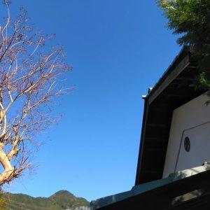 今日も御岳は、雲ひとつない快晴です️ちょっと前まで黄色い葉っぱが残っていたサルスベリも、全て落葉してしまいました。今、御岳渓谷や御岳山は、#モミジ が見頃を迎えていますhttp://ikadamitake.com営業時間・4月〜12月 11〜17時1月〜3月 11〜16時金曜定休(祭日は営業)Tel.0428-85-8726#むかし鳥 #体験型 #炭鳥ikada #ばくだん #mitake #御岳 #御嶽駅 #御岳山 #御岳山ロックガーデン #武蔵御嶽神社 #御岳渓谷 #御岳ランチ #奥多摩フィッシングセンター #奥多摩 #奥多摩湖 #バイク #ロードバイク #カヌー #カヤック #riversup #御岳ボルダー #ペット可 #青空 #快晴 #秋晴れ #紅葉