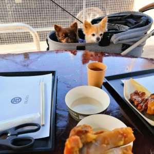"""ご常連の @haranaoki1 さんご家族が、今日も可愛いワンちゃんたちと一緒にお昼ごはんにお越し下さいました🥚向かって左から#ロングコートチワワ の""""ラッキーくん""""6歳♂同じくロングコートチワワの""""チップくん""""12歳♂ チップくんがシニアなため、元気なうちに""""ワンちゃんも食べられる味なしむかし鳥""""を食べに、沢山連れて来て下さるのだそうです🤗私もチップくん&ラッキーくんに会えてとっても嬉しいですラッキーくんは目の前のむかし鳥、チップくんは右のむかし鳥に目線が集中毎度ご来店ありがとうございますhttp://ikadamitake.com営業時間・1月〜3月 11〜16時4月〜12月 11〜17時金曜定休(祭日は営業)Tel.0428-85-8726#むかし鳥 #体験型 #炭鳥ikada #ばくだん #mitake #御岳 #御嶽駅 #秩父多摩甲斐国立公園 #御岳山 #御岳山ロックガーデン #武蔵御嶽神社 #御岳渓谷 #御岳ランチ #奥多摩フィッシングセンター #奥多摩 #奥多摩湖 #バイク #ロードバイク #サイクリング #カヌー #カヤック #ラフティング #riversup #クライミング #ペット可 #nocovid19"""