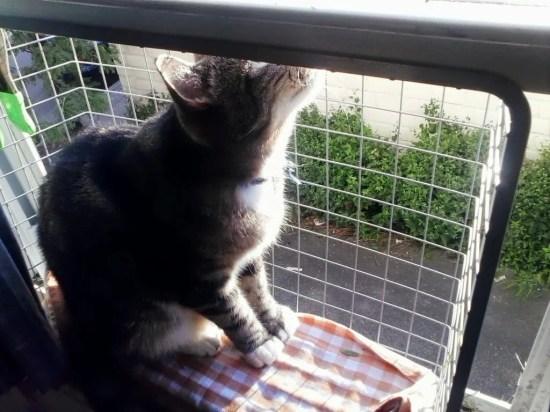 cat window seat screen