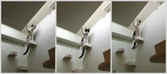 The Prosperity Cat. ENUDDEN cat steps on wall