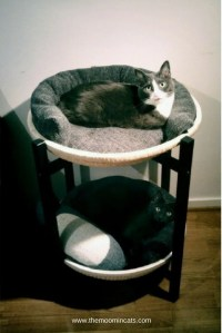 Simple ideas for cat beds - IKEA Hackers - IKEA Hackers
