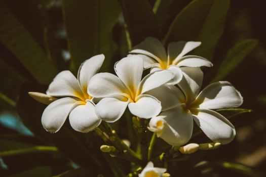 flowers summer garden leaf