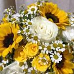 Girasoli fiori estivi