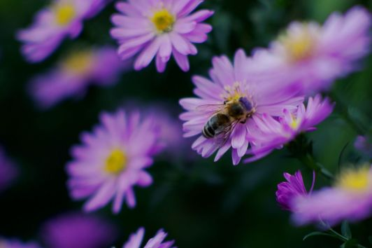 aster_20190929_165429_