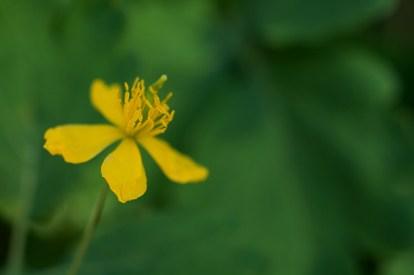 yellow_20200316_DSC_5513