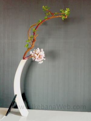 Ikebana Sogetsu curved branch in a curved container emphasizing the movement.