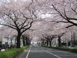 大阪、花見、スポット、3