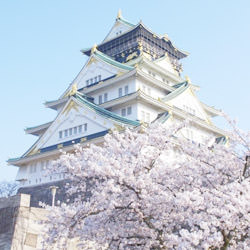 大阪、花見、スポット