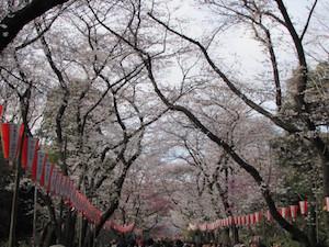 東京、花見、スポット、人気、6