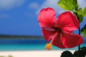 11月は沖縄の旅行へ!気温や服装やイベントは?海は入れるの?