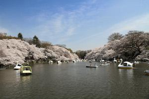 春 東京 おすすめ デート スポット ランキング 3